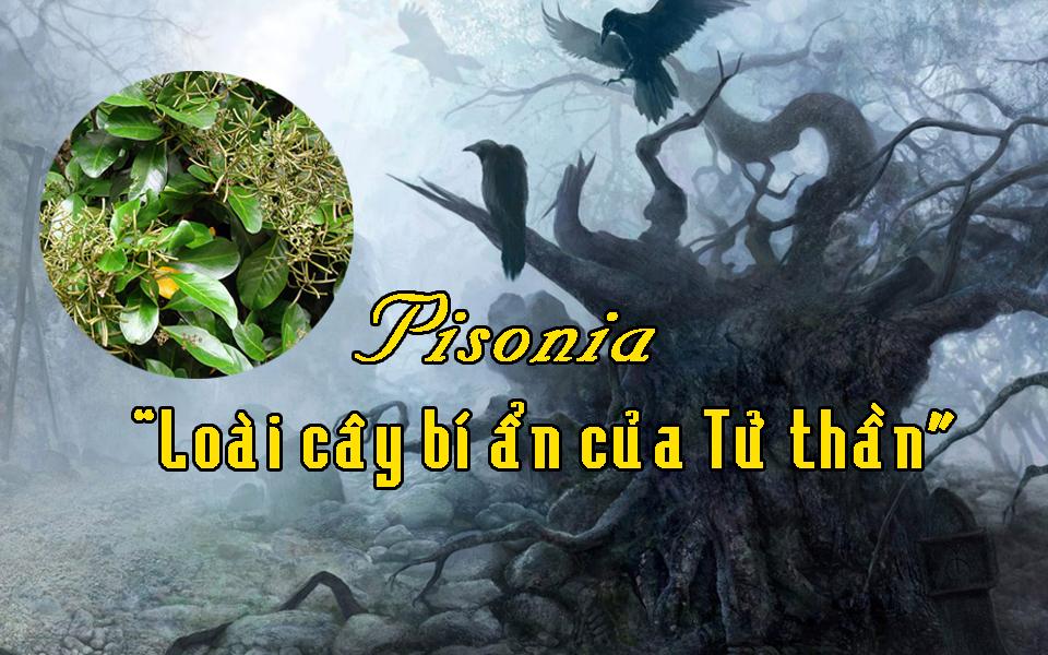 Pisonia – Cây Tử thần gieo rắc nỗi kinh hoàng cho loài chim