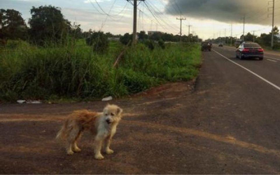Chú chó 'Hachiko' Thái Lan sống bên trạm xăng 4 năm chờ đợi chủ cũ trở về