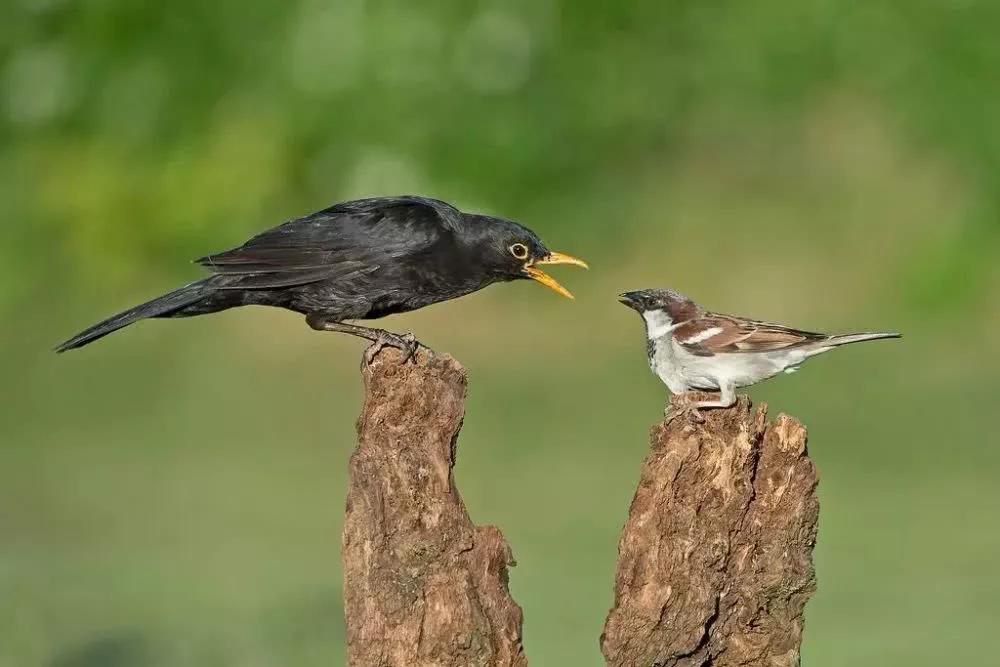 Ký sự báo thù của động vật: Loài vật nếu ôm hận sẽ ghê gớm và nham hiểm cỡ nào?
