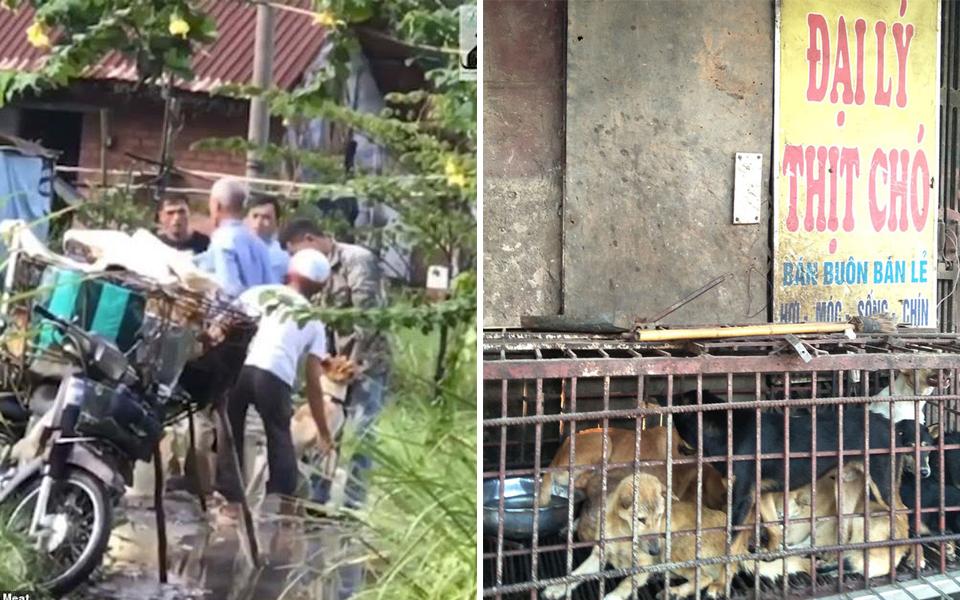 Truyền thông quốc tế phẫn nộ với hình ảnh chó Việt Nam bị ép uống nước mương trước khi bán thịt