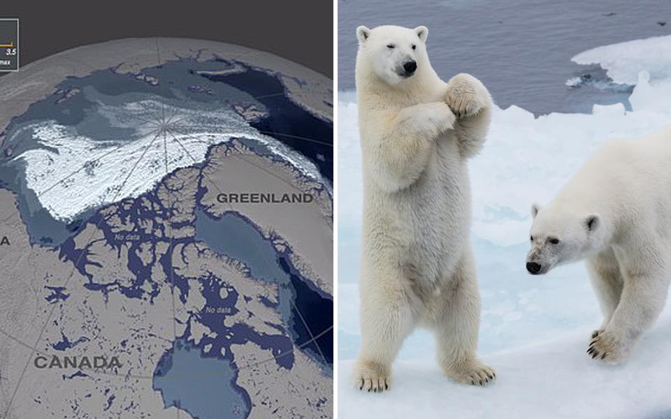 Băng biển lâu đời và dày nhất Bắc Băng Dương đã tan 95%, đe doạ mạng sống của tất cả gấu Bắc Cực
