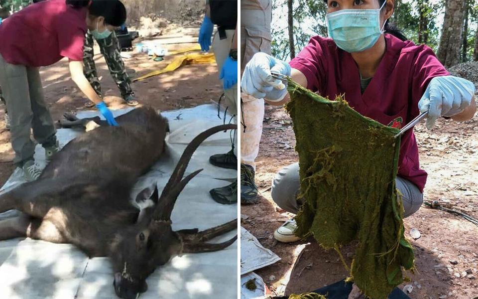 Tìm thấy 7kg rác thải nhựa trong bụng nai hoang dã ở Thái Lan