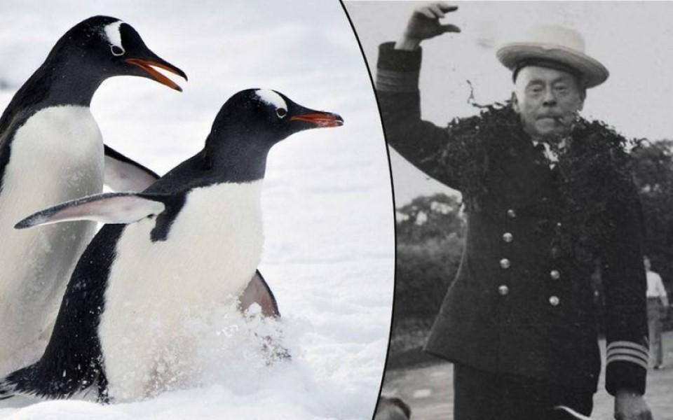 Hé lộ đời sống trụy lạc của loài chim cánh cụt qua tài liệu khoa học 100 năm tuổi