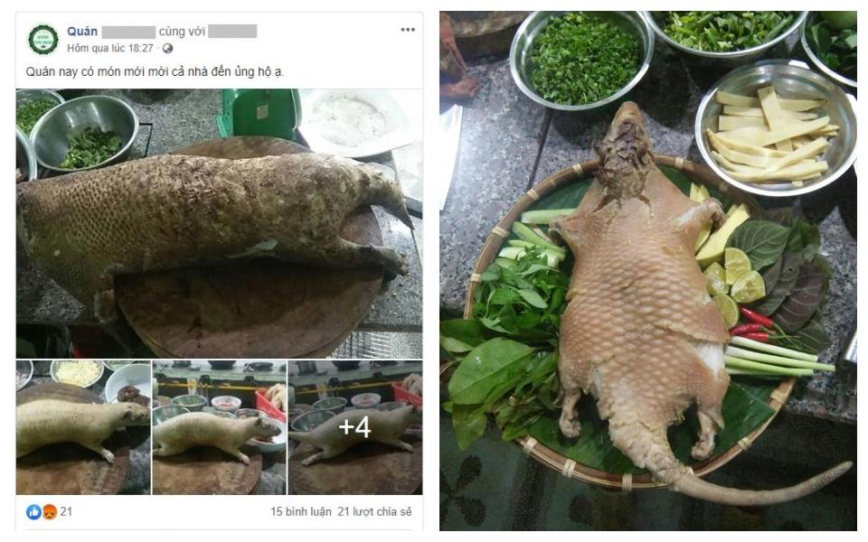 Nghi ngờ quán thịt rừng ở Quy Nhơn công khai giết hại động vật trong Sách Đỏ để thu  hút thực khách