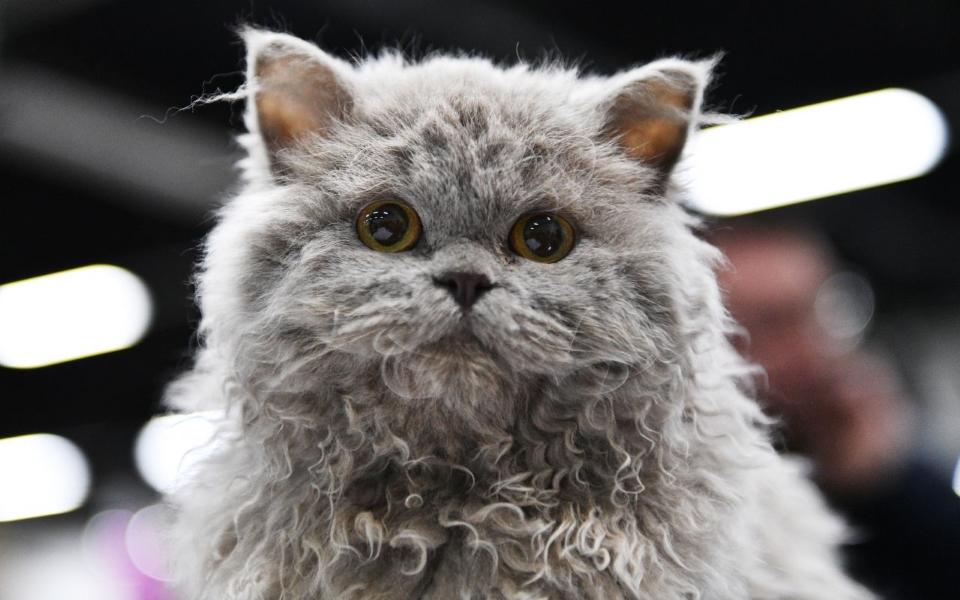 Xuất hiện loài vật mặt mèo, lông chó được nhận xét là 'đáng yêu nhất thế giới'