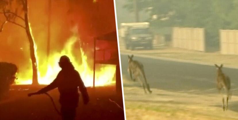 Vụ cháy rừng ở Úc đã giết chết hơn nửa tỷ động vật bản địa