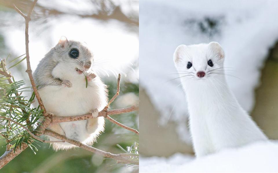 Đảo Hokkaido - Nhà của 7 động vật đáng yêu nhất thế giới mà bạn không thể tìm thấy nơi nào khác