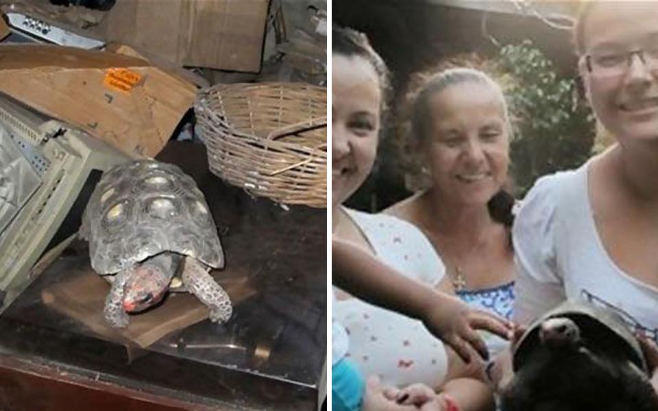 Rùa cưng mất tích, 30 năm sau gia đình lại bất ngờ tìm được cụ trong lúc dọn nhà