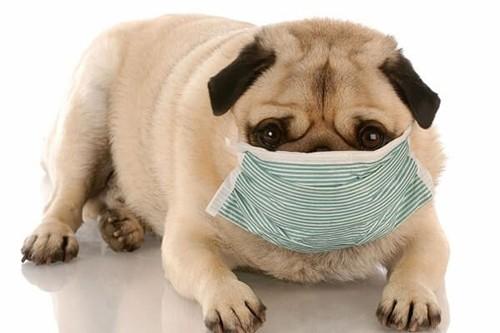 Dịch Corona: Thú cưng có thể nhiễm bệnh Viêm phổi Vũ Hán?