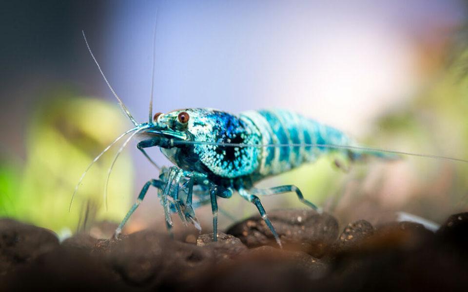 Những sự thật thú vị về động vật mà không phải ai cũng biết