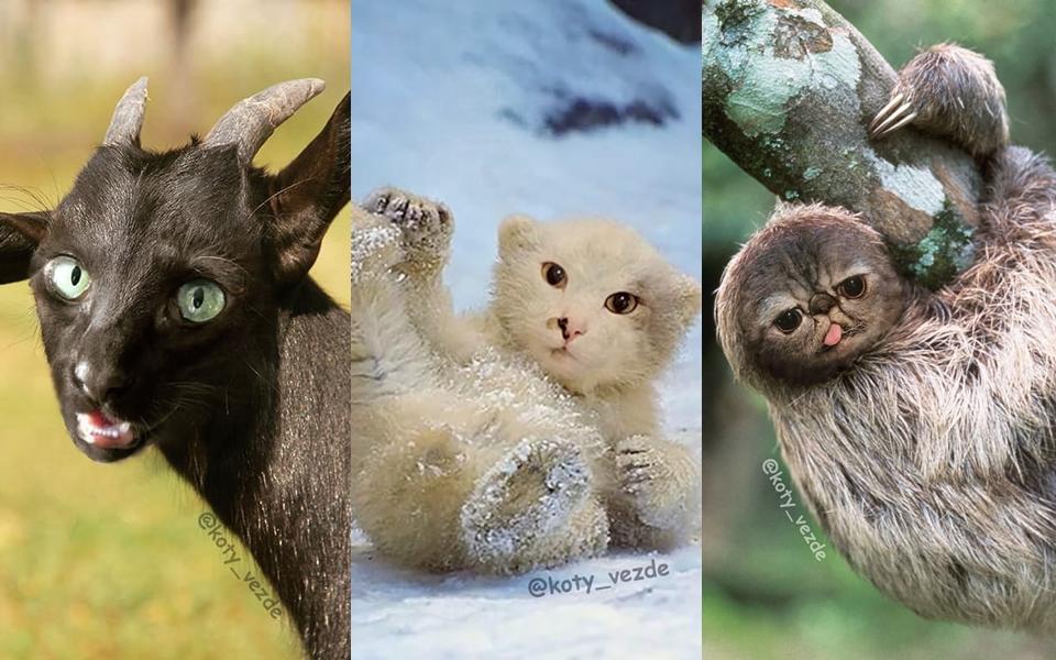 Thế giới động vật trông như thế nào nếu chúng đều có khuôn mặt của... mèo?