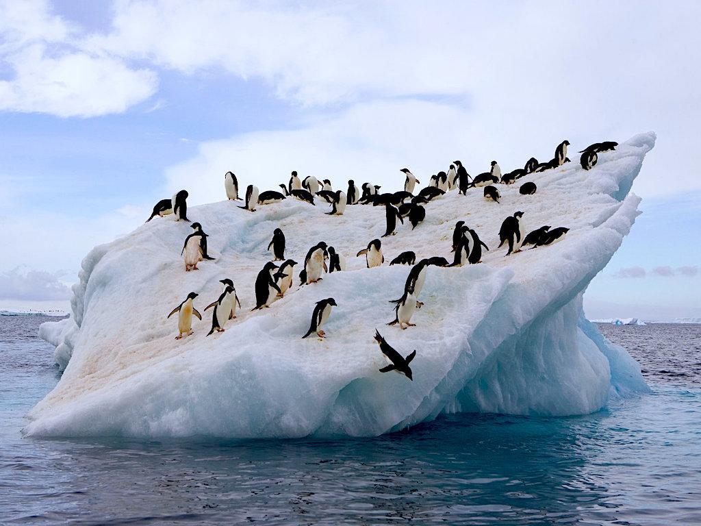 Nhiệt độ Nam Cực đã đạt tới 20 độ C