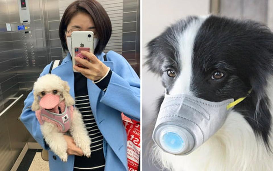 Lo sợ dịch Corona, người dân Trung Quốc lùng mua khẩu trang cho thú cưng