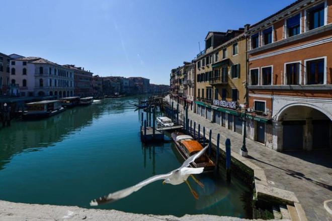 Thành phố Venice bị phong tỏa, các loài cá và thiên nga bất ngờ xuất hiện trở lại ở các kênh đào