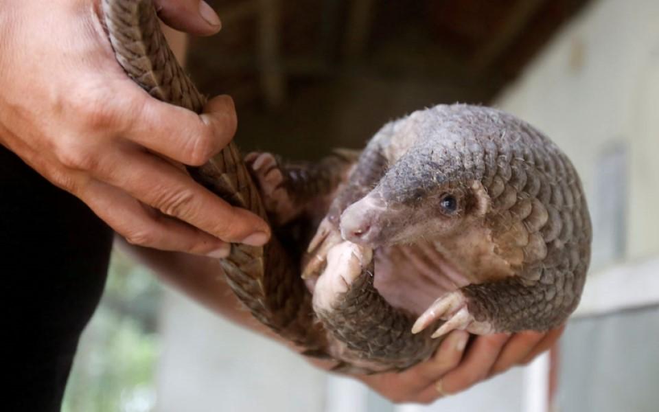 Con người nên ngừng làm hại các loài động vật, hoặc đại dịch tiếp theo sẽ xảy ra