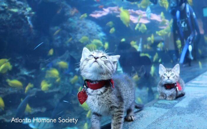 Các bạn chó, mèo đi thăm thú thủy cung trong mùa cách ly, nhìn thôi cũng thấy vui rồi