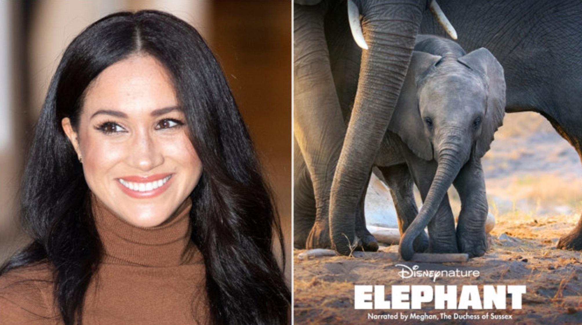 Meghan Markle bị chê lồng tiếng dở tệ trong phim mới 'Elephant'