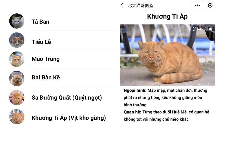 Profile cực đáng yêu của những chú mèo hoang trong khuôn viên trường Đại học Bắc Kinh