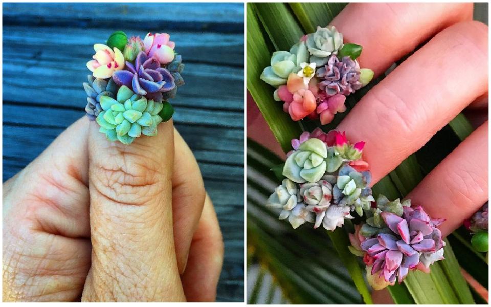 Bộ nail độc đáo sáng tạo từ những cây sen đá tí hon