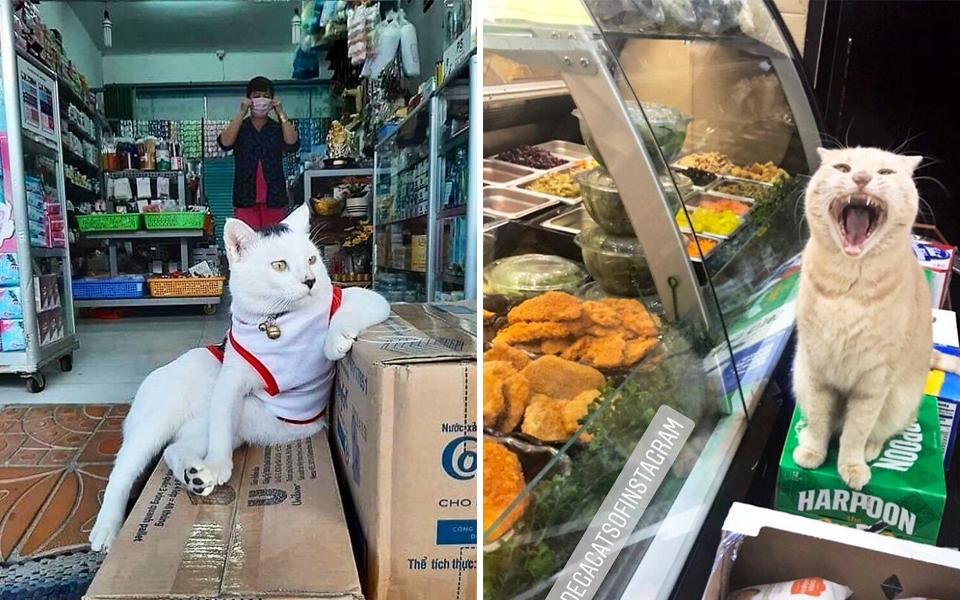 Trang Twitter chuyên đăng ảnh các chủ tiệm lắm lông cưng xỉu trên khắp thế giới