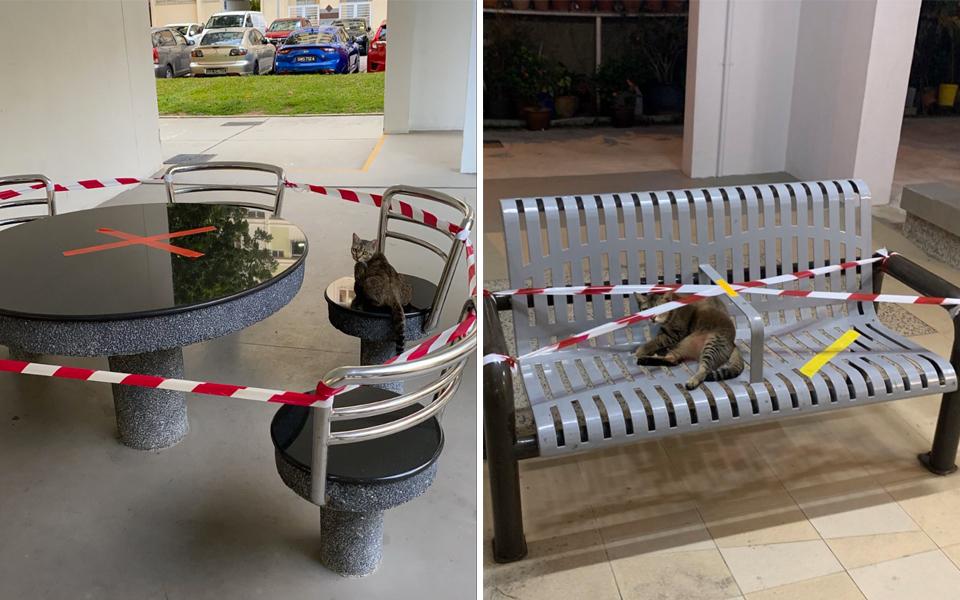 Bàn ghế công cộng tại Singapore bị niêm phong chống dịch, chỉ mỗi lũ mèo là ngoại lệ