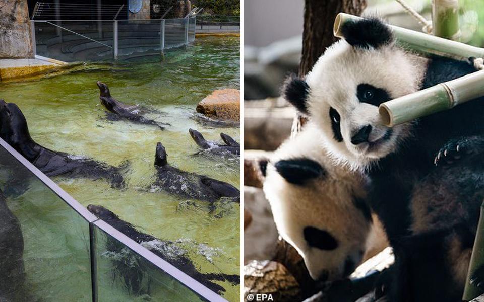 Sở thú Đức gặp khó khăn trong mùa dịch, một số động vật trở thành mồi cho loài lớn hơn