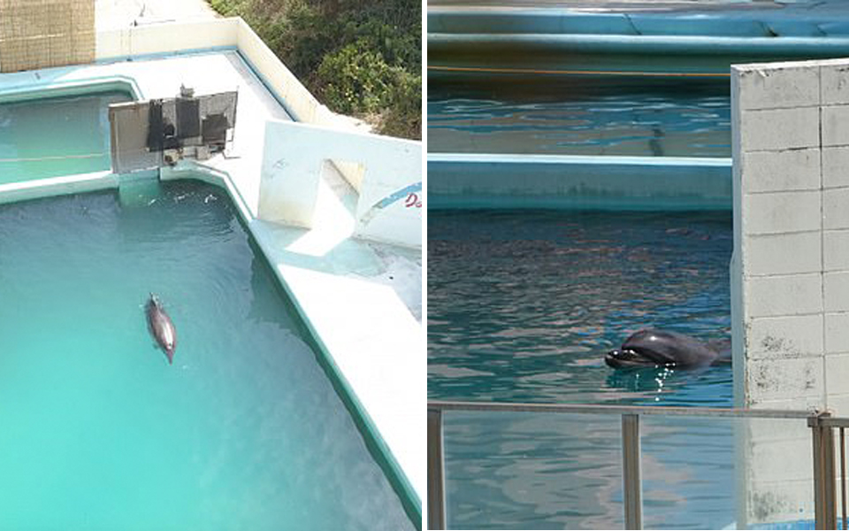 Cô cá heo tội nghiệp qua đời sau 2 năm sống lẻ loi, cô độc trong thuỷ cung Nhật Bản bị bỏ hoang