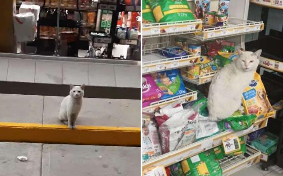 Bé mèo thông minh mỗi ngày đều đến cửa hàng tạp hoá để dụ 'hooman' mua đồ ăn cho
