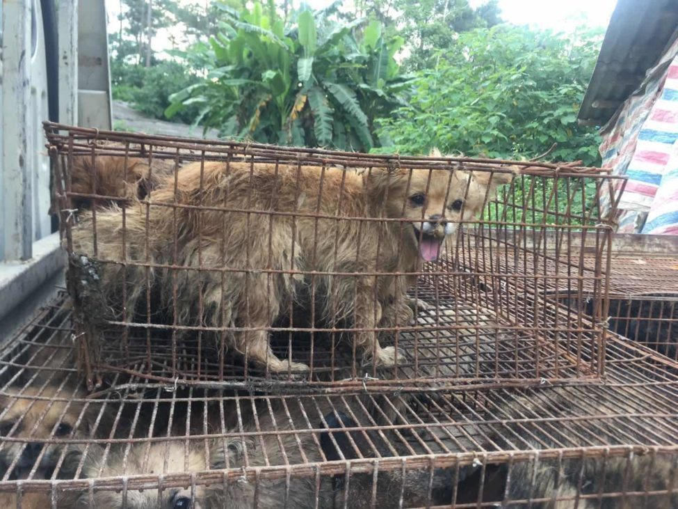 Thâm Quyến là thành phố đầu tiên của Trung Quốc cấm tiêu thụ thịt chó, mèo