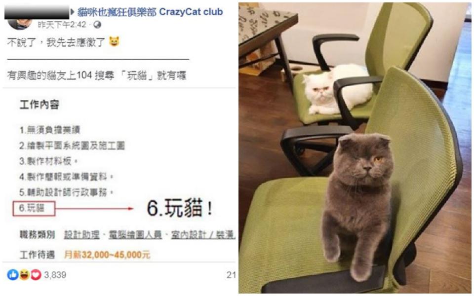 Công ty thiết kế đăng tin tuyển dụng công việc lương 'khủng': Vừa làm vừa... chơi với mèo
