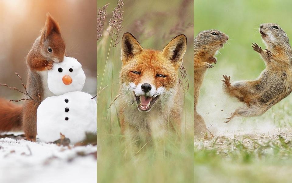 Những khoảnh khắc siêu 'ồn ào', dễ thương của động vật hoang dã