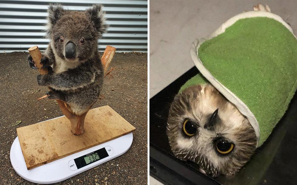 Cách nhân viên vườn thú đo cân nặng các bé động vật: 'Dùng sự dịu dàng này để đối xử với em'
