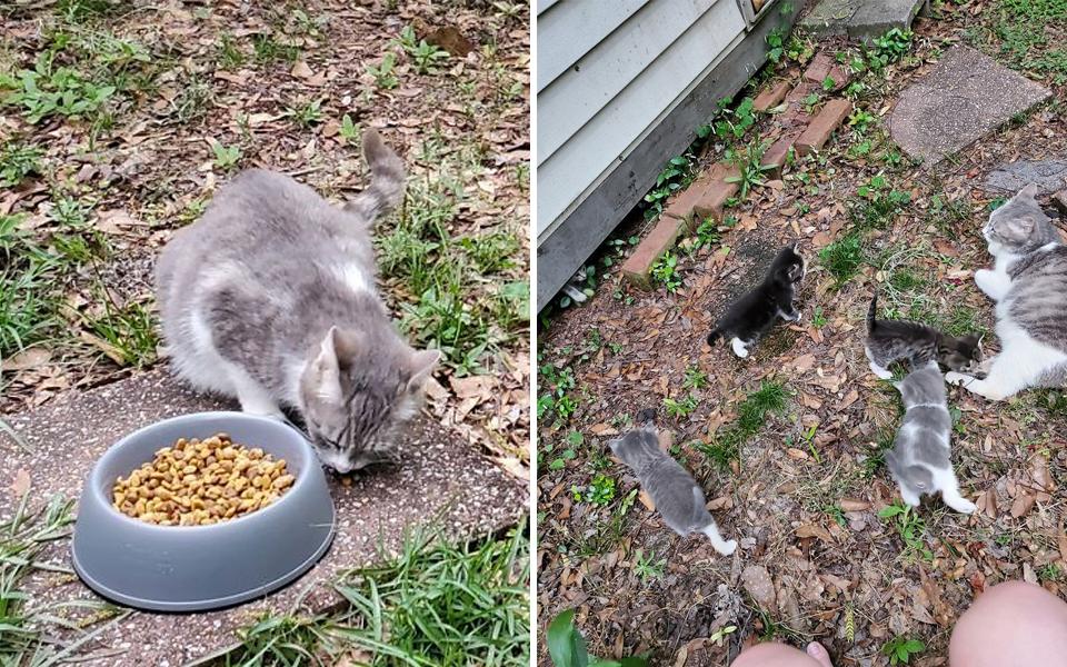 Chị mèo hoang nhiệt tình dẫn 'hooman' đã cho mình ăn đến gặp đàn con đáng yêu