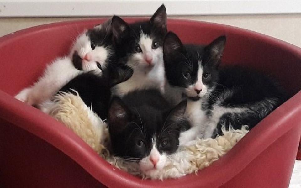 'Khủng hoảng mèo con' tại Anh: Hàng chục ngàn chú mèo con ra đời trong thời gian cách ly khiến cả nước lao đao