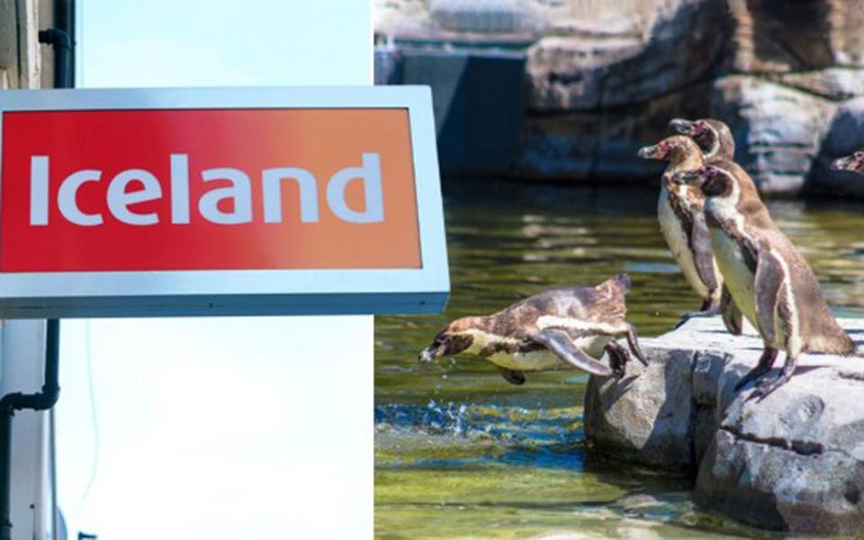 Siêu thị ở Anh nhận nuôi tất cả chim cánh cụt của vườn thú vì nơi này không đủ tiền chi trả thức ăn