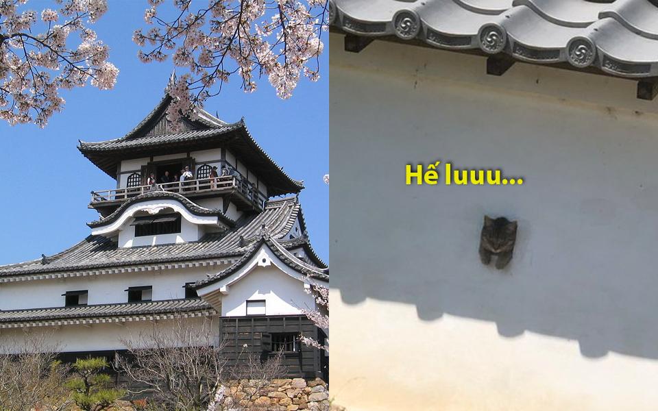 'Lâu đài núi Chó' tại Nhật Bản đã bị lũ mèo xâm chiếm mà chẳng ai nỡ đuổi đi
