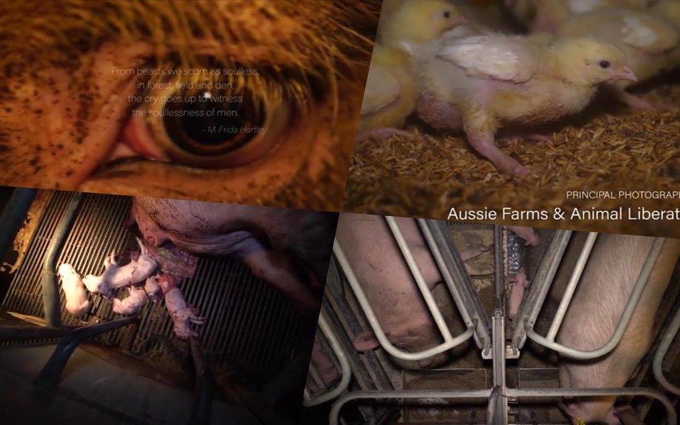 Dominion: Những thước phim chân thực đến rùng mình về nạn ngược đãi động vật