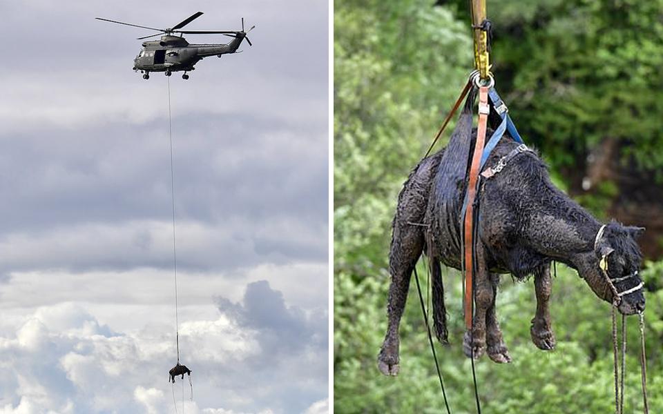 Cuộc giải cứu kịch tính giúp chú bò sống sót sau 5 ngày rơi xuống thác nước cao 45 mét