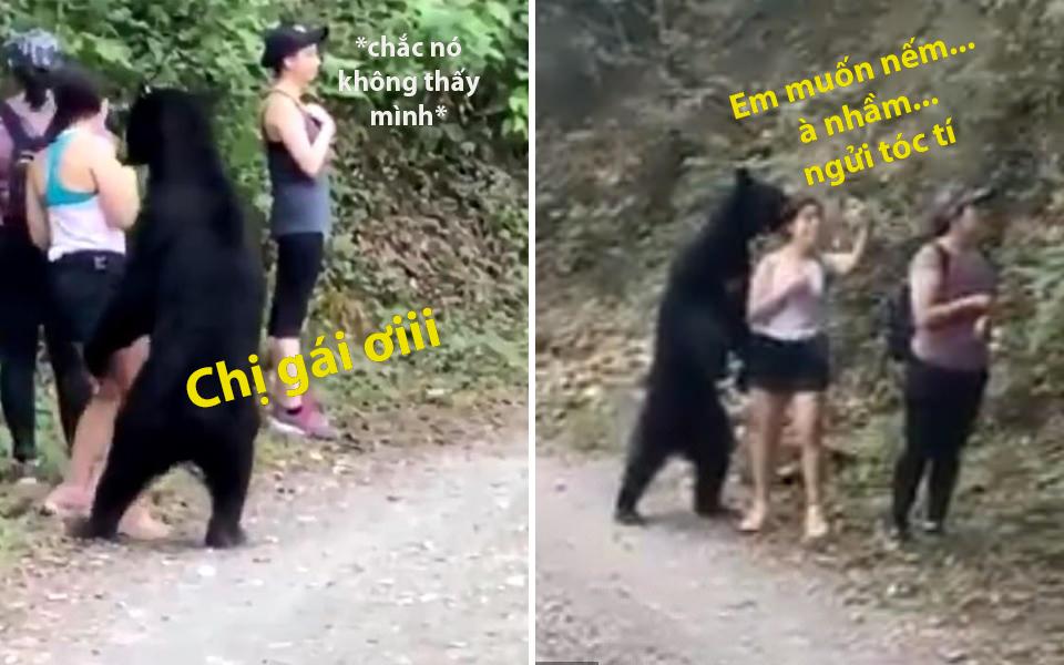 Chú gấu đen quên mất mình là gấu, tiến sát con người để ngửi tóc, tạo dáng chụp ảnh selfie