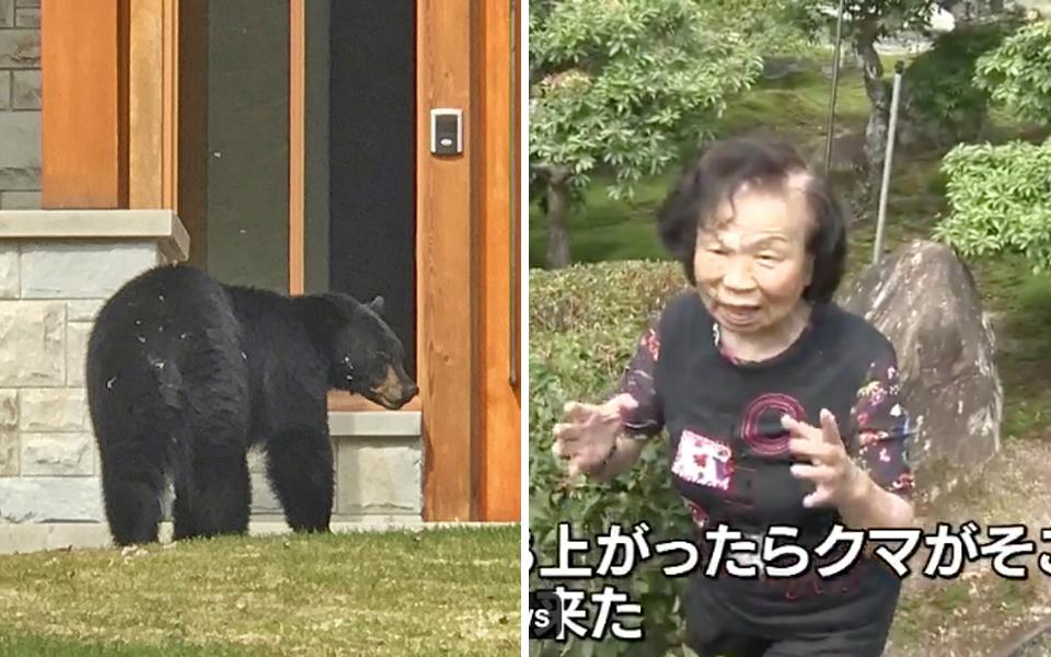 Anh gấu xui xẻo đi ăn không lựa ngày, đụng độ cụ bà 82 tuổi rồi bị 'đi đường quyền' suýt bay lên trời