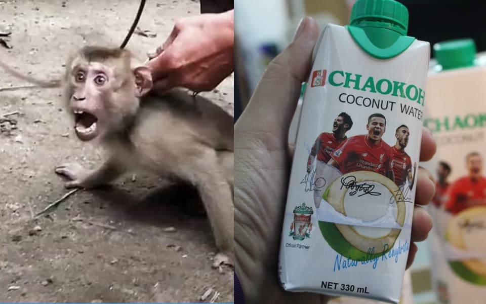Liverpool FC cắt hợp đồng với hãng nước dừa Thái Lan sau vụ 'bắt khỉ làm nô lệ' chấn động MXH