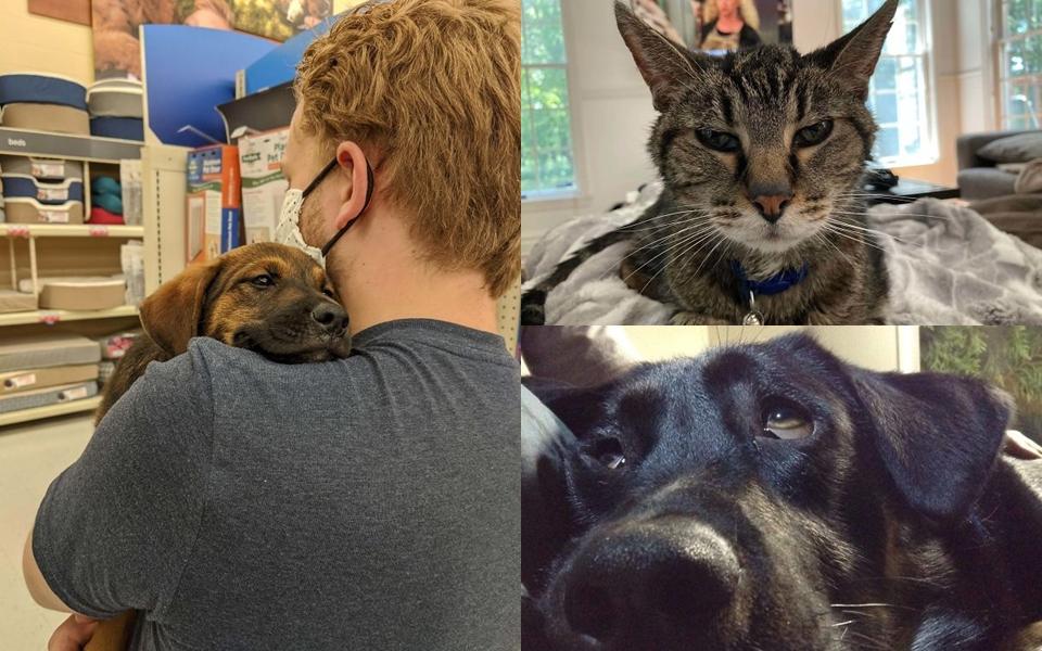 Top thú cưng được giải cứu hot nhất tháng 7: Mỗi bức ảnh là một câu chuyện siêu ấm áp