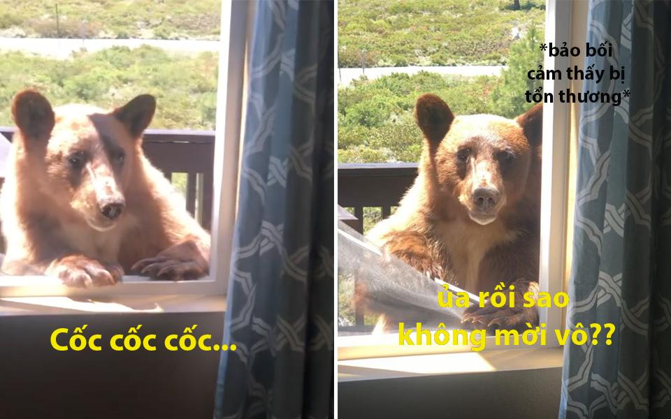 Vẻ mặt tủi thân của chú gấu muốn vào nhà chơi nhưng không ai dám mở cửa cho vào