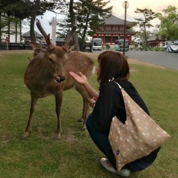 Nai linh thiêng ở Nara chết vì tắc ruột do ăn phải rác thải nhựa của du khách