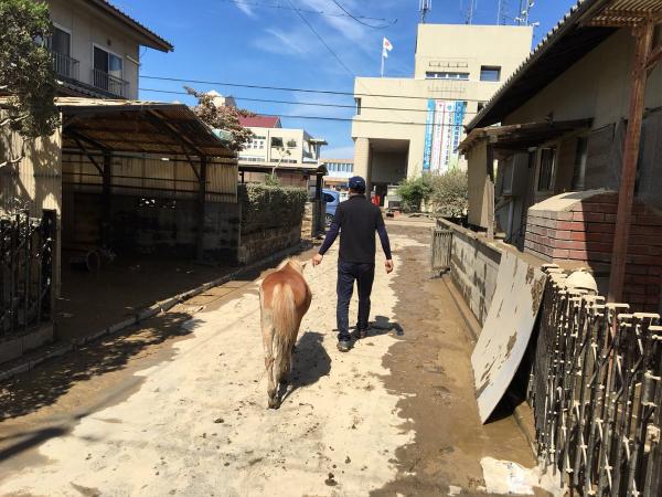 Câu chuyện kì lạ về cô ngựa lùn mất tích được tìm thấy trên mái nhà sau trận lũ ở Nhật Bản
