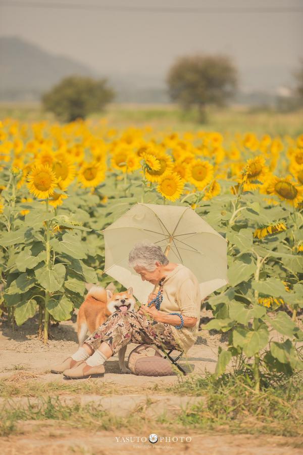 Bộ ảnh bà ngoại và Shiba Inu: Bốn mùa xuân, hạ, thu đông, lòng mãi nhẹ tênh như mây trời