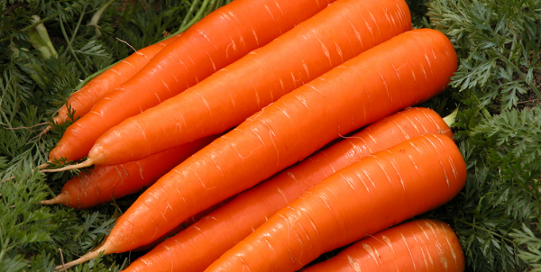 impact of biofield treatment on yield quality and control of nematode in carrots 1