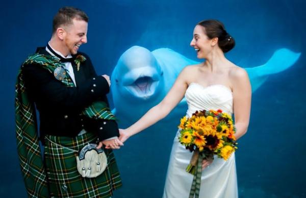 bear photobombs wedding 5b9a079e4140a 700