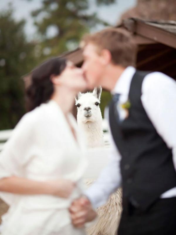 bear photobombs wedding 5b9a07d504bfe 700