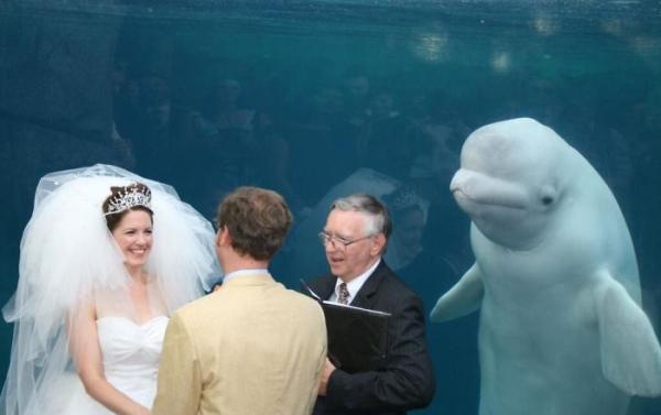 bear photobombs wedding 5b9a0833a5627 700